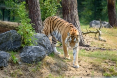 Safaripark_2019-07-17-18