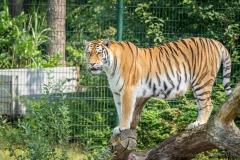 Safaripark_2019-07-17-19