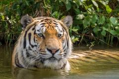 Safaripark_2019-07-17-20