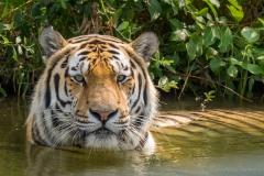 Safaripark_2019-07-17-21