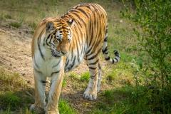 Safaripark_2019-07-17-22