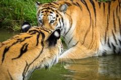 Safaripark_2019-07-17-24