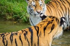Safaripark_2019-07-17-25