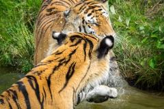 Safaripark_2019-07-17-26