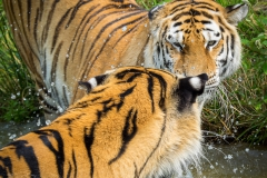 Safaripark_2019-07-17-27