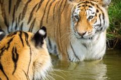 Safaripark_2019-07-17-28
