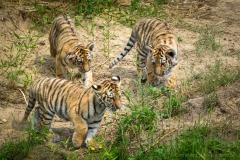 Safaripark_2019-07-17-29