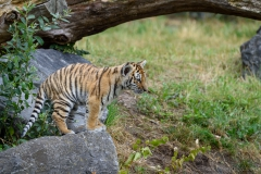 Safaripark_2019-07-17-30