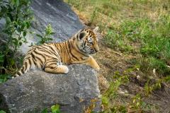 Safaripark_2019-07-17-31