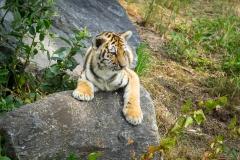 Safaripark_2019-07-17-32