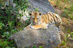 Safaripark_2019-07-17-33