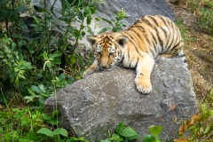 Safaripark_2019-07-17-34