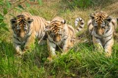 Safaripark_2019-07-17-36