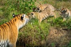 Safaripark_2019-07-17-37